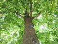 Natur in der Stadt IMG 0003.jpg
