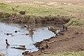Nature of Ngorongoro Conservation Area (101).jpg