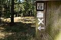 Naturschutzgebiet Elmpter Schwalmbruch Sommer 2015 -8842.jpg