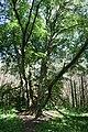Naturschutzgebiet Glindower Alpen 2.jpg