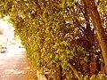 Nea Erythraia, Greece - panoramio (5).jpg