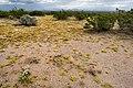 Near Foote Draw - Flickr - aspidoscelis (2).jpg
