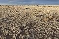 Near the Bald Hills - Flickr - aspidoscelis.jpg