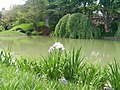 New York Botanical Garden 15.jpg