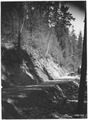New road to Foley Springs on Mckenzie River District, Cascade Forest, Oregon, 1922. - NARA - 299203.tif