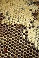 Newlands bees 025.JPG