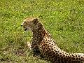 Ngorongoro Crater (82) (14148824274).jpg