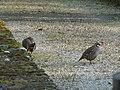 Nieuil birds.JPG