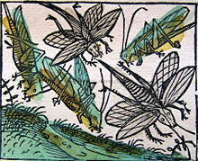 Nuremberg chronicles - Locusts (CCXXXv).jpg