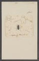 Nycterinus - Print - Iconographia Zoologica - Special Collections University of Amsterdam - UBAINV0274 027 20 0028.tif
