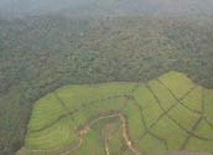 Nyungwe Forest - Nyungwe Forest