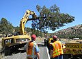 ODOT removing hazard tree (10349036483).jpg