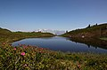 Oberer Paarsee bei der Almrosenblüte.jpg