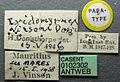 Ochetellus vinsoni casent0102302 label 1.jpg
