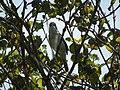 Oiseau arbre.jpg