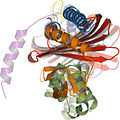 Orthogonal views of cytoplasmic capping protein superposed onto its homolog CapZ.jpg