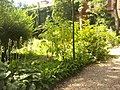 Orto botanico Brera a Milano 312.jpg