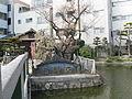 Osaka Temmangu hoshiainoike.jpg