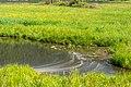 Ossiach Alt-Ossiach Bleistätter Moor Feuchtwiesen 23052019 6986.jpg