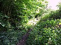 Overgrown footpath near Dinton - geograph.org.uk - 846230.jpg
