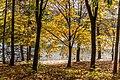 Pörtschach Halbinsel Buchenwald an Promenade 28102017 1767.jpg