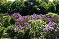 Pētera Upīša dārzs Dobelē - panoramio.jpg