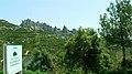 P1110089 Parc natural de la Muntanya de Montserrat, la sierra de Montserrat, «la montagne sciée» (6350708347).jpg