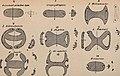 Paléontologie végétale cryptogames cellulaires et cryptogames vasculaires (1914) (14576997169).jpg