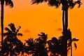 Palm Trees at Sunset in Fort Lauderdale.JPG
