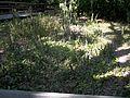 Palmetto FL Emerson Point Portavant Mound top02.jpg