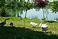 Palude del Preval (Gorizia).jpg