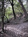 Parc de Vallvidrera 174-7488 IMG.JPG