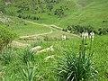 Parcours botanique Le Gua, Alpe d'Huez abc9.jpg