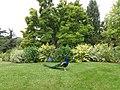 Paris - Jardin d'Acclimatation - Magnolia de Solange, planté en 2010.jpg