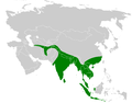Parus cinereus distribution map.png