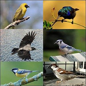 Passeriformes-01v01.jpg