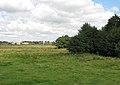 Pasture land west of Heckingham - geograph.org.uk - 1493124.jpg