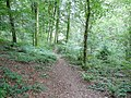 Path between Soudley ponds - geograph.org.uk - 1472906.jpg