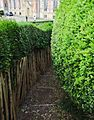 Path in the hedges.jpg