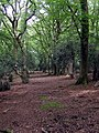 Path through Deazle Wood, New Forest - geograph.org.uk - 440549.jpg