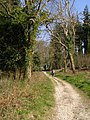 Path to Beacon Corner, Puddletown Forest - geograph.org.uk - 396463.jpg