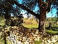 Pedra seca i alzina al pla de Labritja - panoramio.jpg