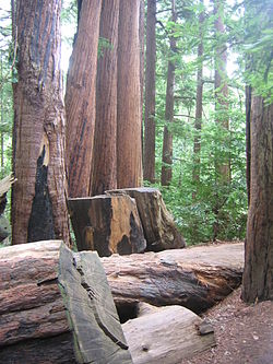 Redwoods Travel Guide