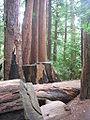 Pfeiffer Big Sur State Park2.jpg