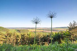 Pflanzenvielfalt im Naturschutzgebiet 'Gleistalhänge' bei Jena, Bürgel im Hintergrund.jpg
