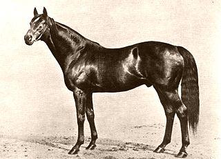 Phalaris (horse) British-bred Thoroughbred racehorse
