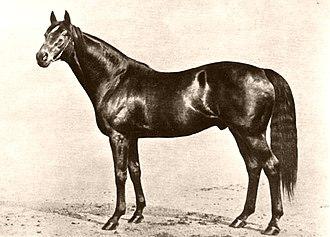 Phalaris (horse) - Image: Phalaris (GB)