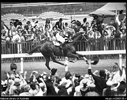 Phar Lap wins the Melbourne Cup.jpg