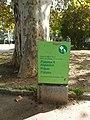 Plàtan - arbre d'interès local - Jardins de Vil·la Amèlia P1280076.jpg