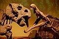 Placerias vs. Redondasaurus.jpg